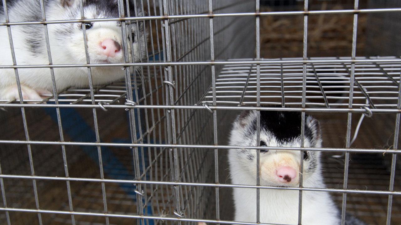 Farma ve Velkém Ratmírově ročně vyprodukuje kolem 10 tisíc kožešin.