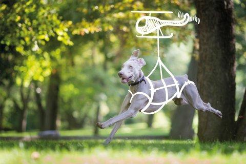 Soukromý psí útulek Dogpoint letos vydal další ze série kalendářů.