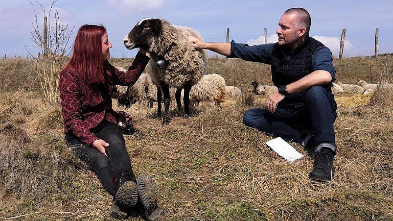 Pasačka ovcí: Jsem ovčí máma, mám stádo z odvržených jehňat, milují mě a žárlí na mě