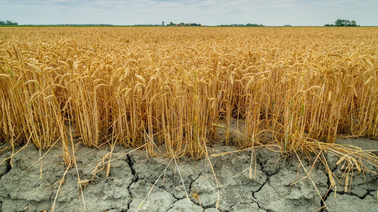 Česko od roku 2015 trápí extrémní sucho.
