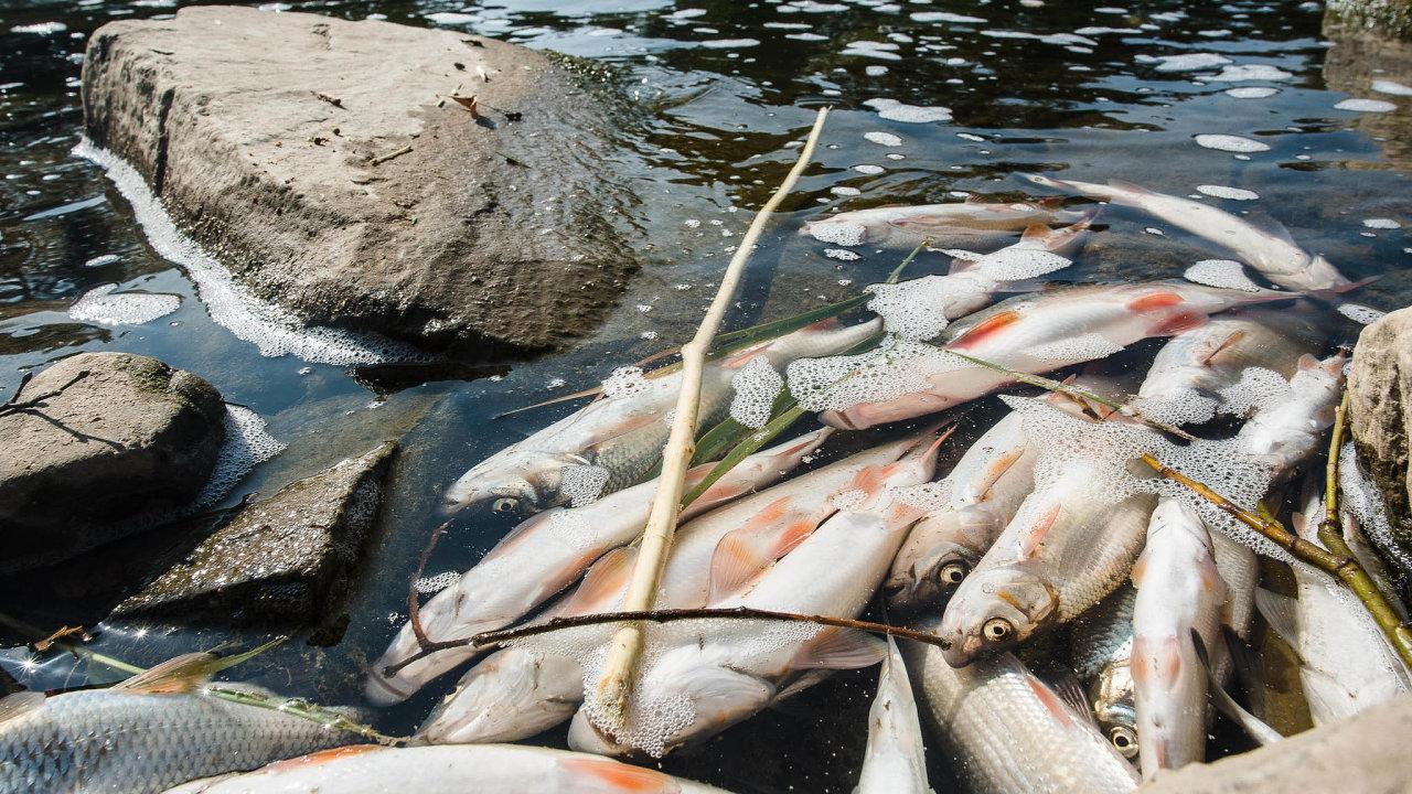 Velké ztráty. Do kafilerie bylo z Bečvy odvezeno více než 40 tun uhynulých ryb. Celkovou škodu rybáři odhadují na desítky milionů korun.