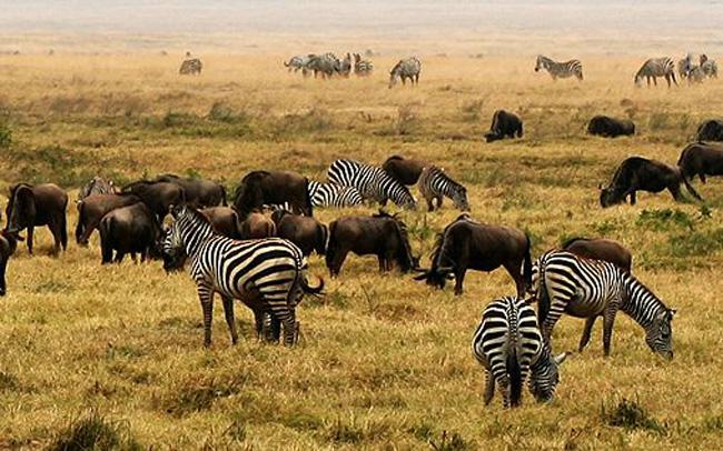 NgoroNgoro, Tanzánie