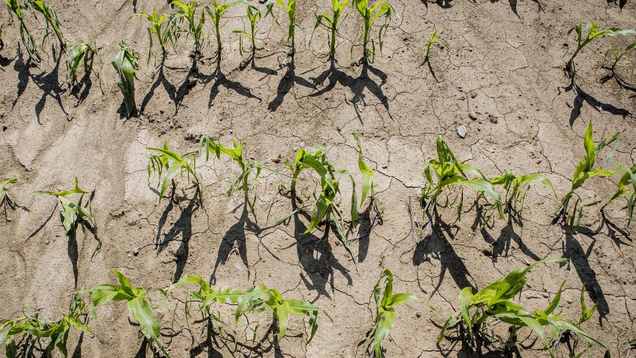 Míst, kde ornice mizí kvůli nevhodnému pěstování zejména kukuřice, přibývá.