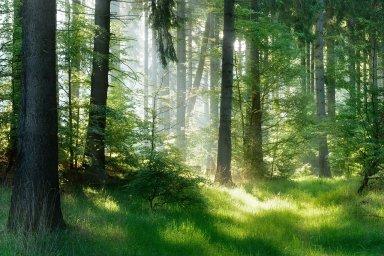 Síti houbových vláken, jež se rozkládá pod lesy, vědci začali říkat wood wide web ((celo)lesní síť) podle termínu world wide web (celosvětová síť), označující pavučinu stránek, jež utváří internet.