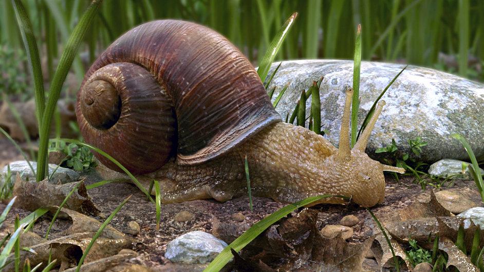 Snail by Antonio Peres Filho