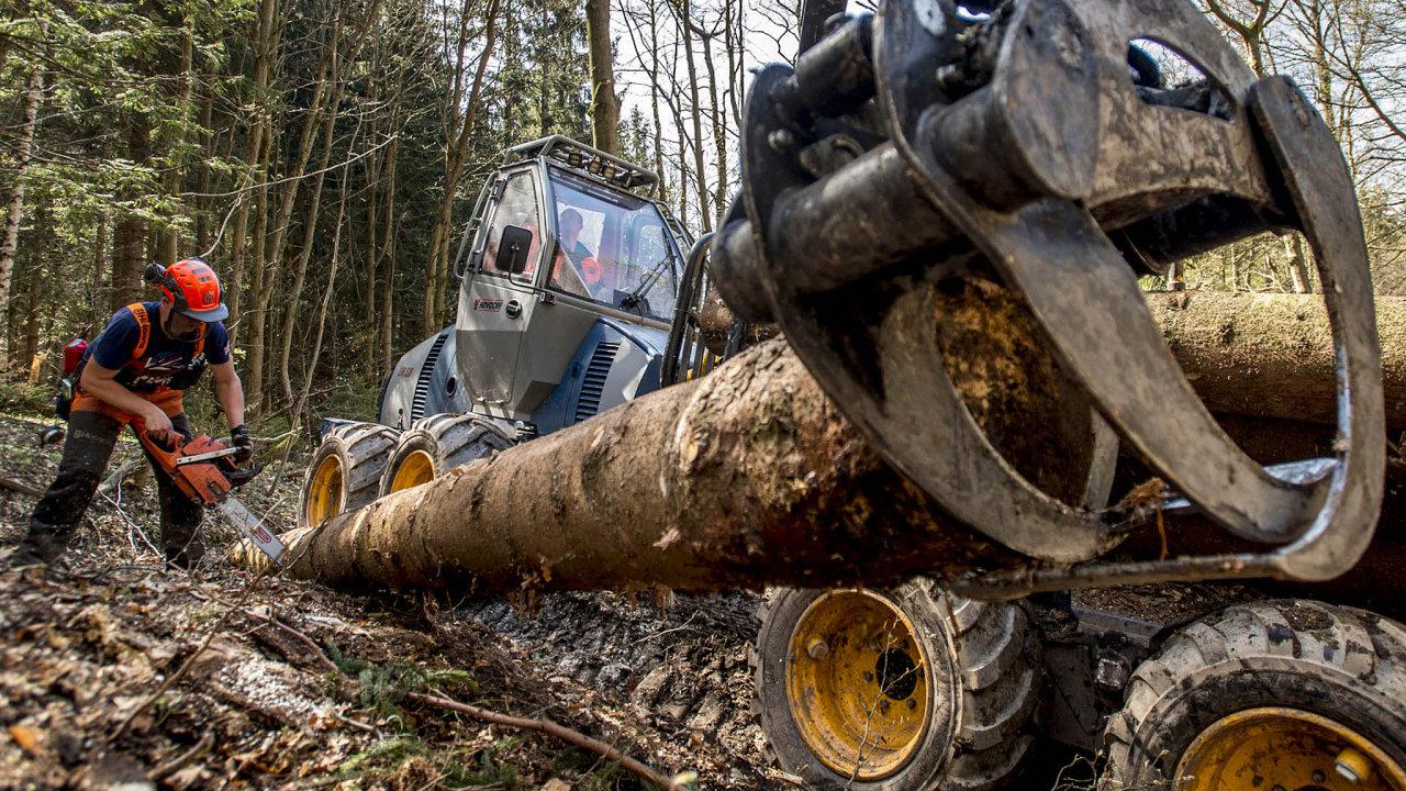 Státní Lesy ČR obhospodařují skoro polovinu lesů vzemi.