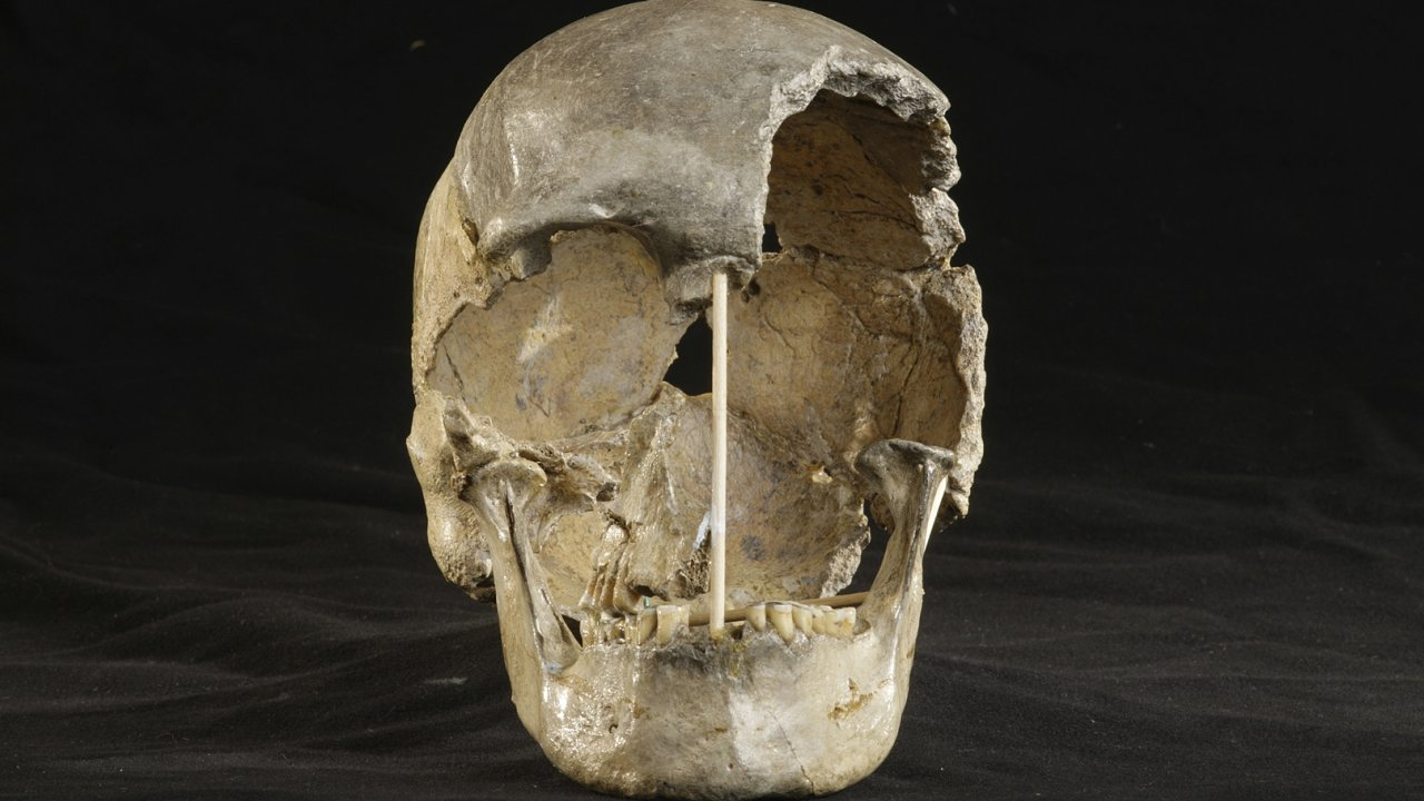Lebka ženy z Koněprus.