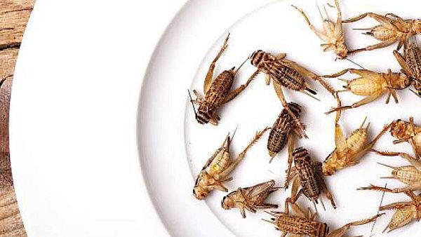 Dáte si? Hmyz je zdravý, nabitý proteiny a vitaminy. Bude jídlem budoucnosti, předvídají experti na výživu.
