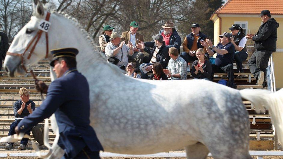 Ilustrační foto - dražba koní v Kladrubech nad Labem