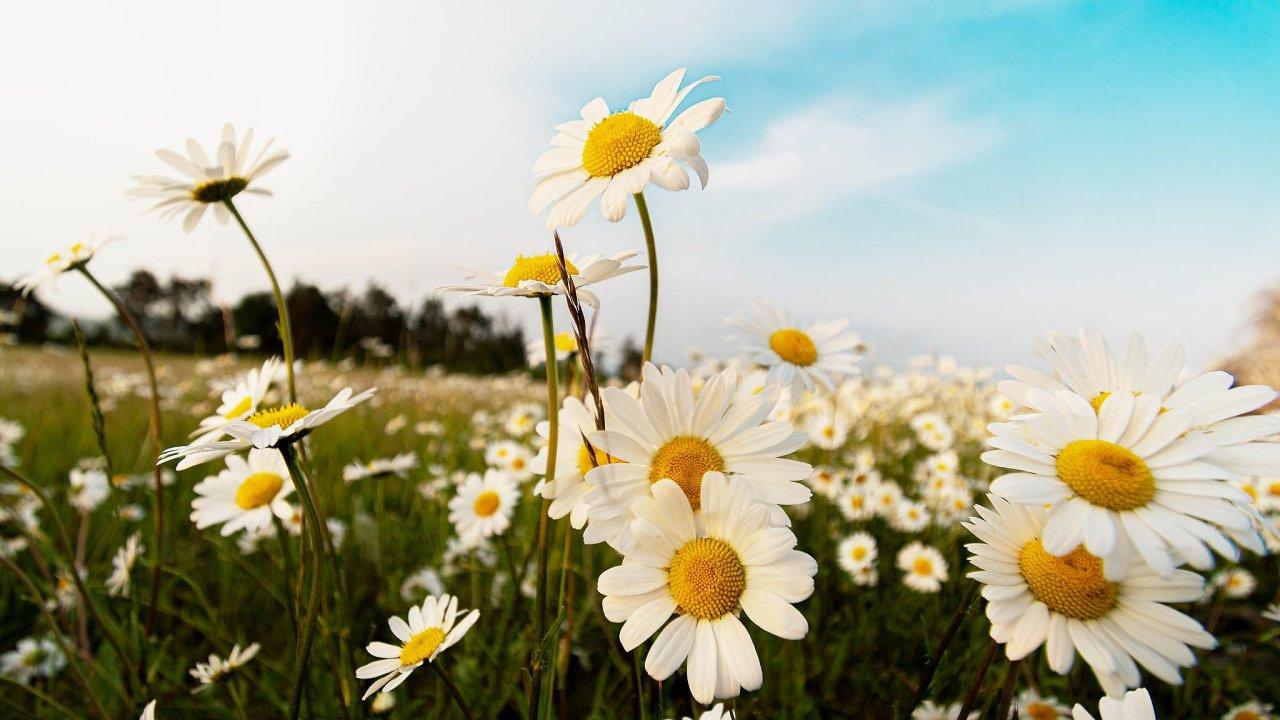 Když zase otevřu oči, stojí slunce vysoko naobloze, louka plná kopretin bzučí aomamně voní.