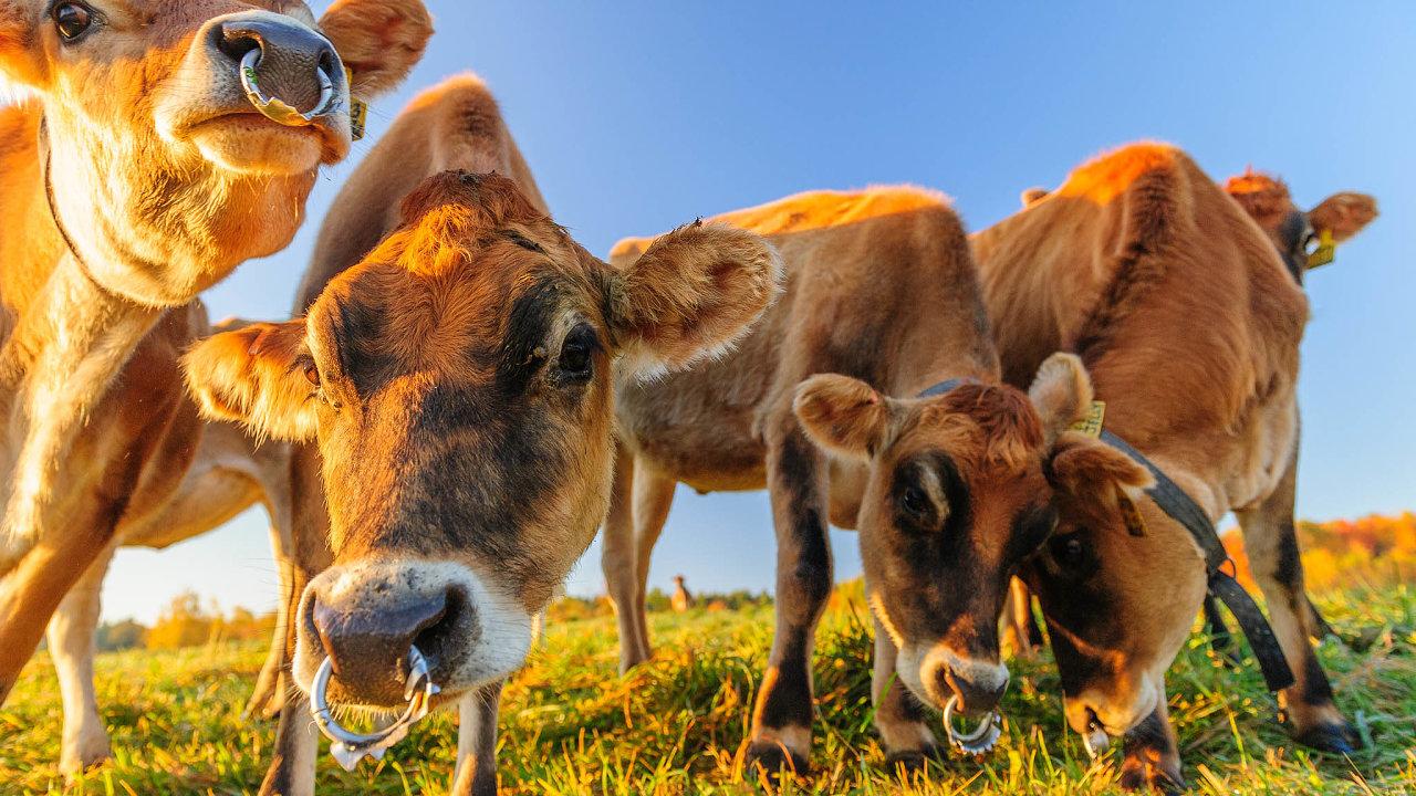 Američané požadují, aby součástí vzájemné dohody bylo izemědělství, tedy aby mohli američtí farmáři do Británie vyvážet hovězí maso obsahující růstové hormony.