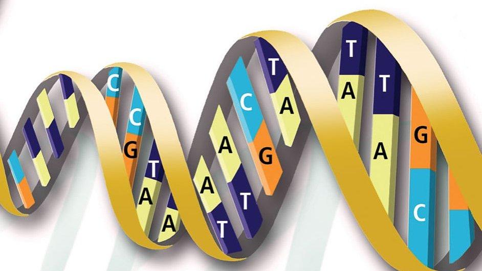 Struktura dvoušroubovice DNA - A se pojí pouze s T, C pouze s G. Foto: U.S. Department of Energy.