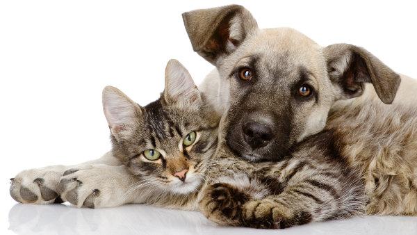 Danění podléhá i prodej koťat a štěňat (ilustrační foto)