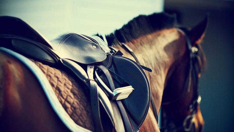 Pořizovací koně cena se odvíjí od plemene, rodokmene, věku, vzhledu, určení a také od případných soutěžních výsledků.