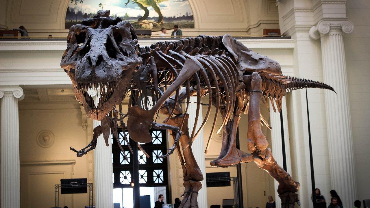 Kostra největšího masozřavého dinosaura na světě - ilustrační foto.