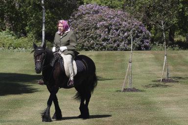 Britská královna Alžběta II. jezdí ivesvých 94 letech pravidelně na koni. Teď se na něj ale posadila povíce než dvou měsících, které musela kvůli pandemii trávit vizolaci.