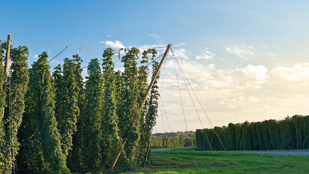 Čína i EU podepsaly dohodu, která zajišťuje ochranu stovky potravinářských azemědělských produktů, z Česka je to například českobudějovické pivo ažatecký chmel.