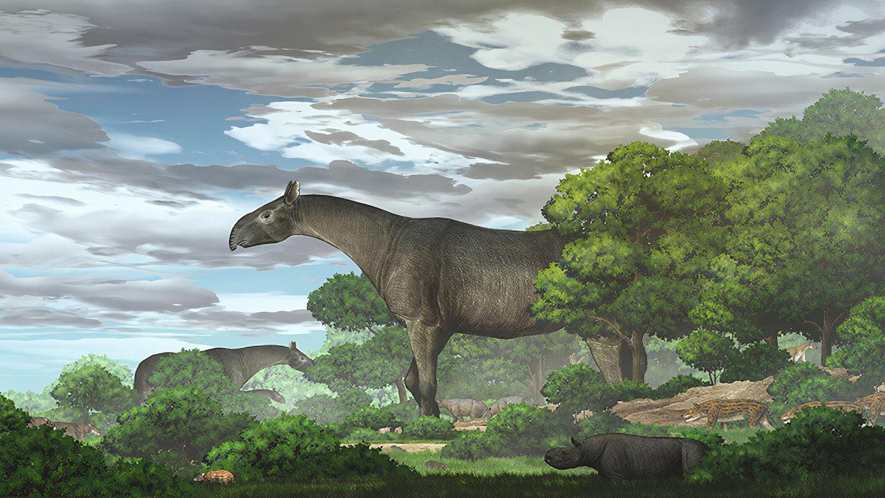 Nosorožec bez rohů Obrovský tvor připomínající dnešního tapíra dosáhl až dokorun stromů, kde okusoval listí.