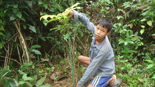 Dítě sází strom v Banladéši, jeden z vítězných projektů