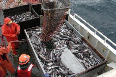 Ekosystém ohrožuje i nadměrný rybolov.