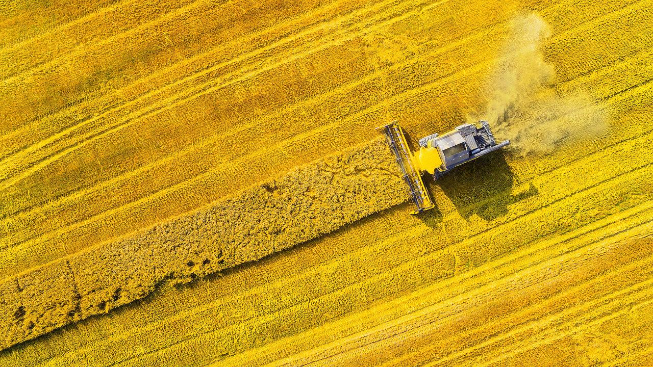 Čí řepka to bude? Rakušany ovládaná RWA Czechia považuje zakonkurenční výhodu především vlastní vyšlechtěná osiva, jako jsou pšenice či řepka (nasnímku).