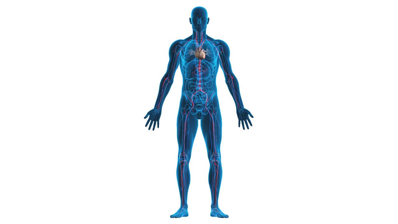 Polymery nahrazují kosti poničené úrazem, vyrábějí se z nich umělá srdce a jednou by mohly umět opravit i poraněnou míchu.