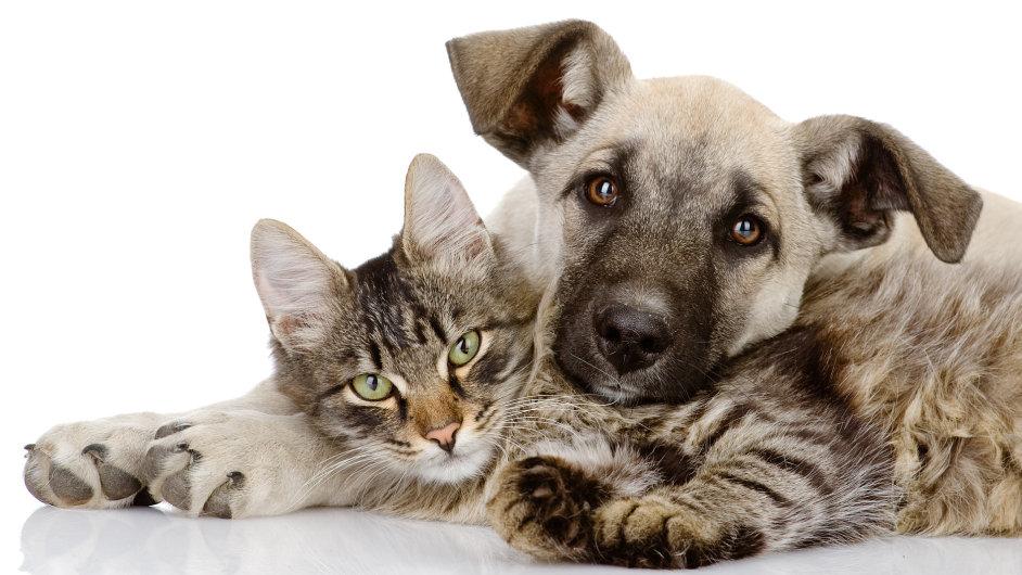 Počty psů a koček na Západě se sice příliš nemění, ale jejich majitelé na jejich výživu vynakládají stále více a více.