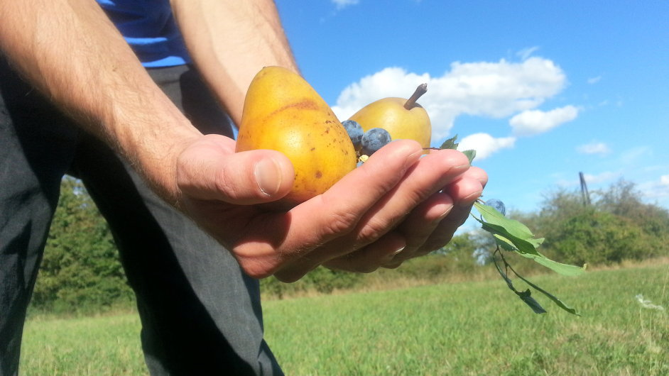 Projekt Na ovoce poukazuje na místa, kde si můžete ovoce natrhat přímo z keřů či stromů.