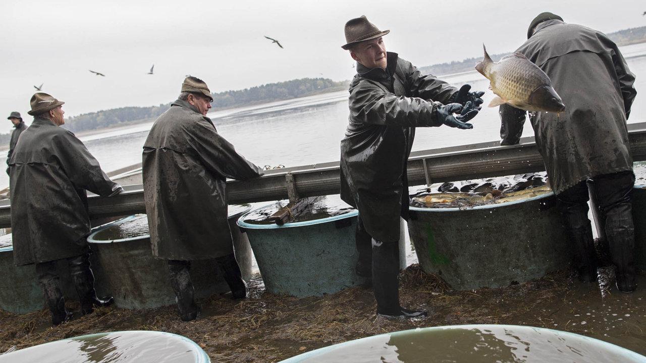 V rybnících se pod nánosy bahna skrývá zlaté dno. Na chovu ryb se dá pěkně vydělávat– když pomohou dotacemi evropské fondy astátní rozpočet.