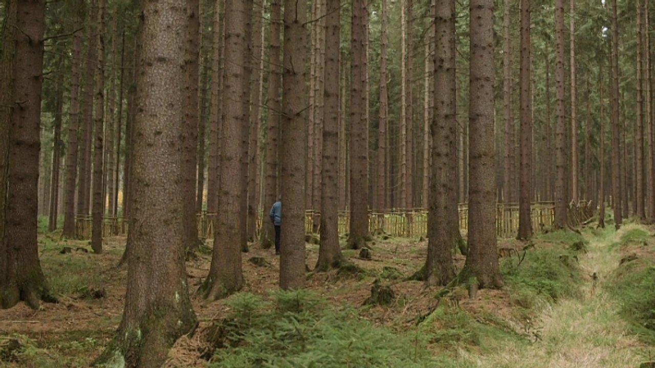 Nejhorší kůrovec je v Praze. Zahraniční lesníci se v Česku učí, jakou katastrofu může brouk způsobit.