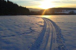 Běh na lyžích je pro tělo ozdravnou kúrou. Zapojí svaly, podpoří srdce