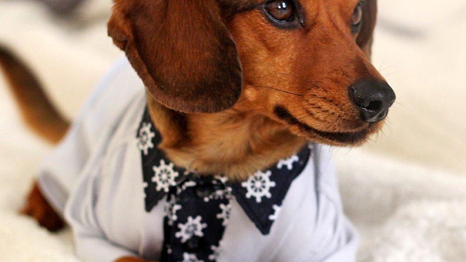 Pod značkou Barney´s Suits vyrábí návrhářka Lucie Červíková stylové oblečky pro psy.
