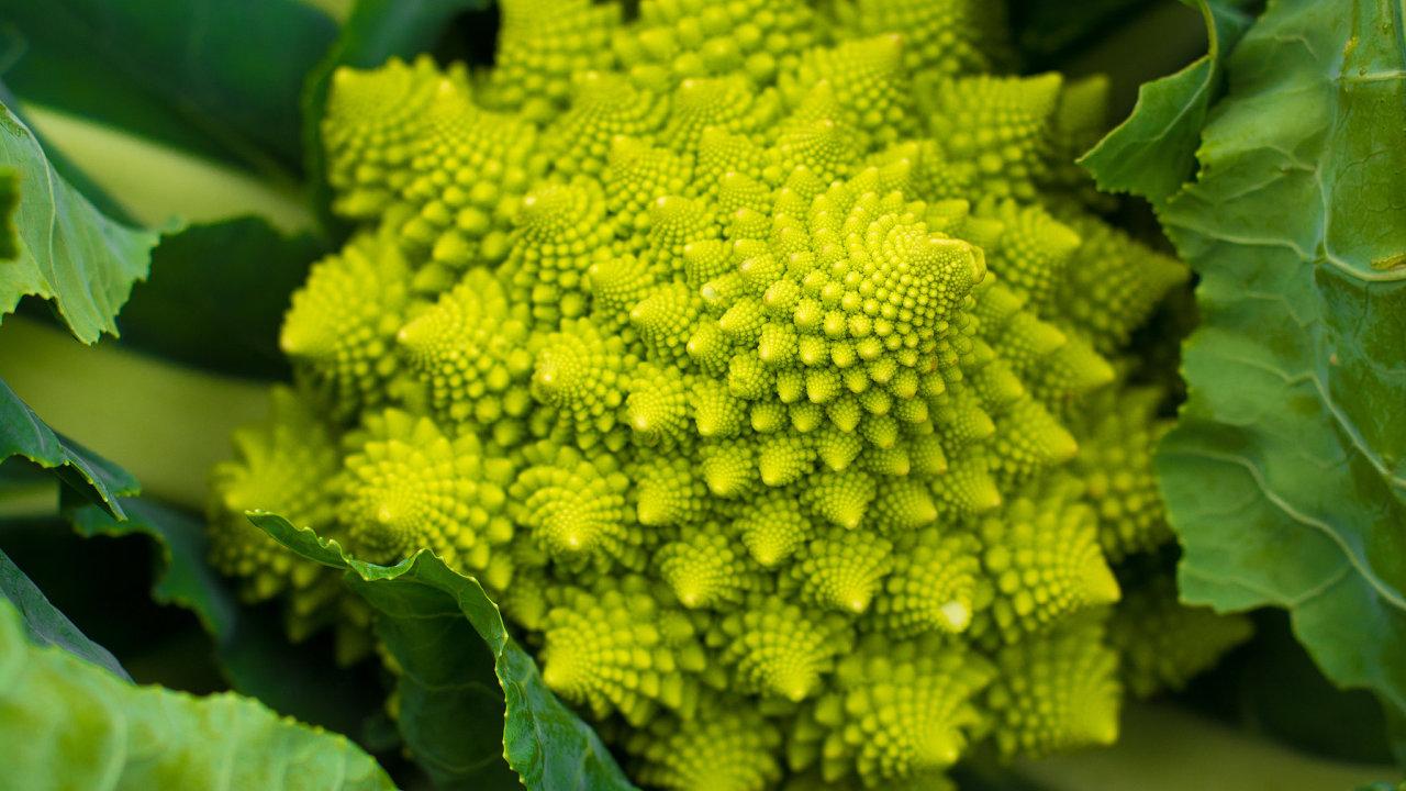 Krása způsobená genovou odchylkou Aby namísto bachraté bílé hlavy běžného květáku vznikla esteticky ladná růžička Romanesca, česky kvěkolice, stačila drobná chyba vjednom genu.