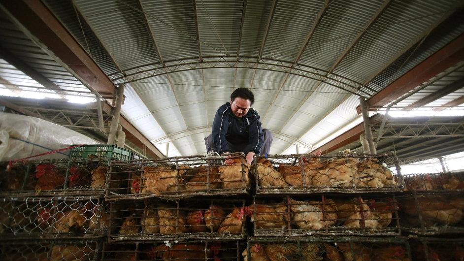 Drůbež na šanghajském trhu