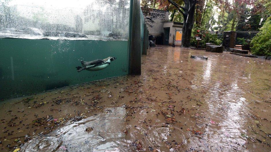 Zaplavený areál Zoo Praha
