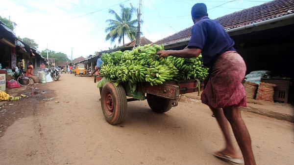 Na trhu v indickém kraji Kerala, banány Plantain jsou tu nejoblíbenějším ovocem.