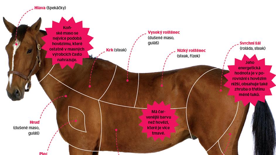 Charakteristika koňského masa