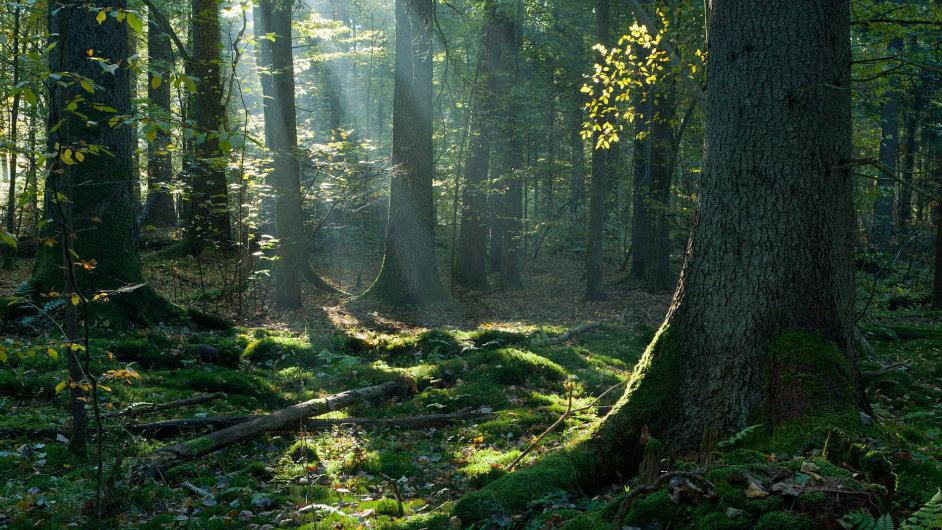 Od vraždy v temném lese se odvíjí příběh románu Aleše Palána (ilustrační snímek).
