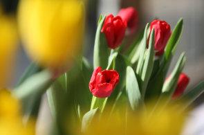 Dva tisíce růží nebo patnáctikilový pugét. Květinářství zažívají valentýnské žně