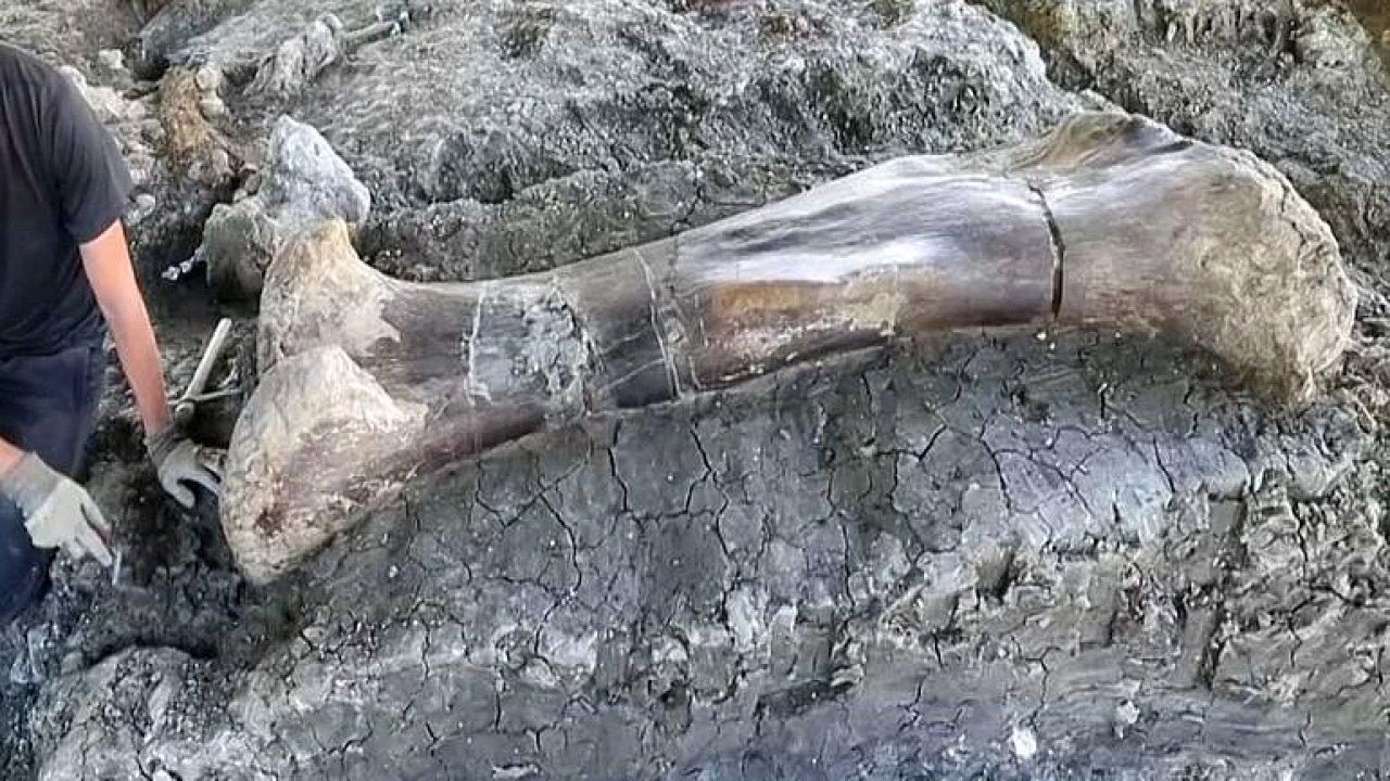 Francouzští vědci objevili gigantickou dinosauří kost