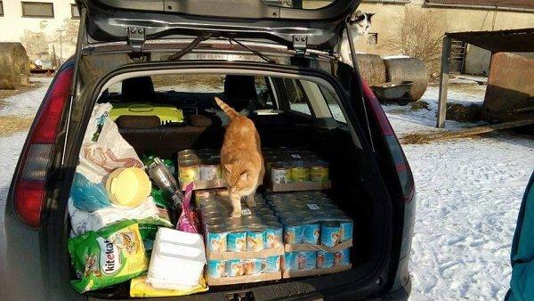 Hodonínský útulek Kočky SOS vybral přes 20 tisíc korun.