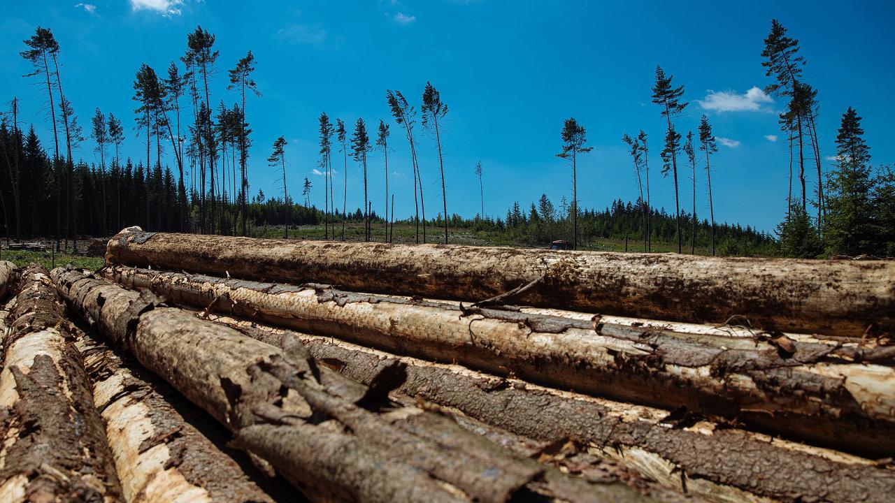 Kůrovcové těžby. Vlesích se dnes těží téměř výhradně kůrovcem napadené smrky. Kalamita začala naseveru Moravy, aktuálně jsou však nejkritičtěji zasaženy Vysočina aJihočeský kraj.