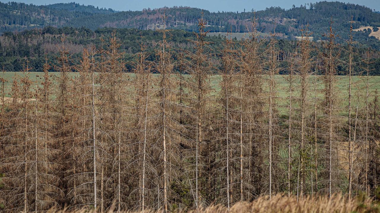 Vpříštím roce se objem poškozeného dříví kůrovcem může zdvojnásobit až na 120 milionů metrů krychlových.