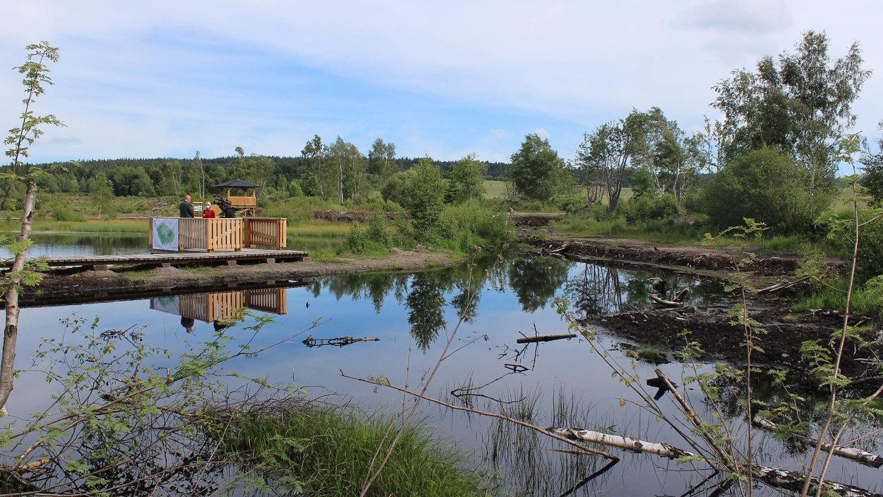 Perninské rašeliniště ničila těžba doroku 2000. Teď se jej Lesy ČR snaží obnovit.