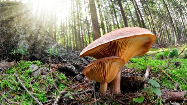 Obzvlášť šikovné jsou v tomto ohledu houby.