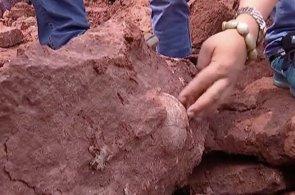 Video: Na čínském staveništi našli dinosauří vejce. Podle vědců jsou stará 70 milionů let