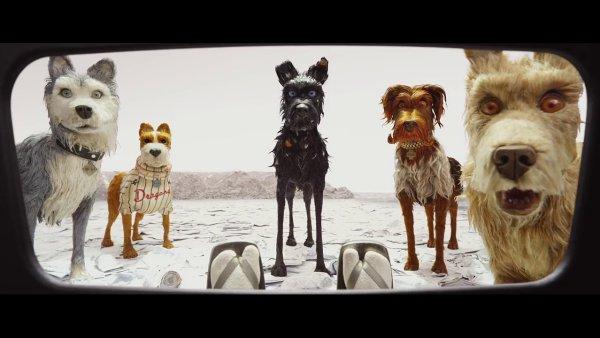 Do českých kin film Isle of Dogs uvede distribuční společnost CinemArt 14. června 2018.