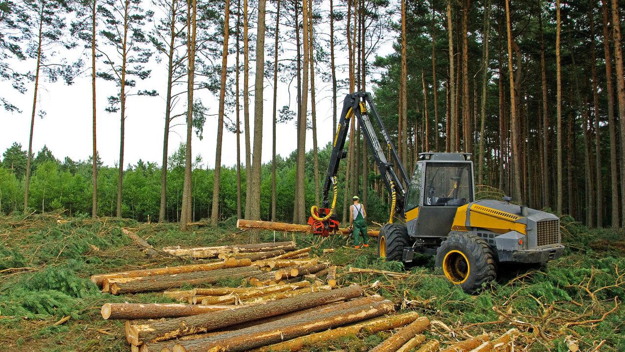 Nejen české lesy při mimořádném kácení chudnou. Vlastníci, které dosud živil prodej dřeva, se propadají doztrát.