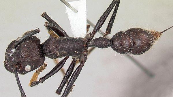 Bol� v�c bodnut� mravence, nebo v�ely? V�dec sestavil �eb���ek