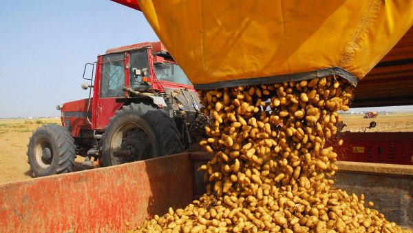 Úroda brambor kontinuálně klesá - Ilustrační foto.
